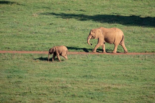 Amazing elephants on the meadow