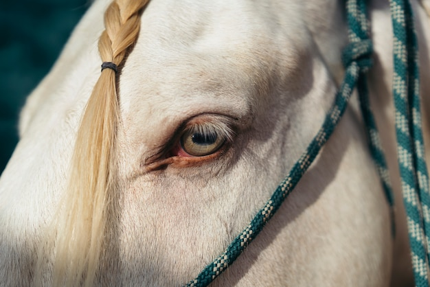 Amazing green eye of a white horse.