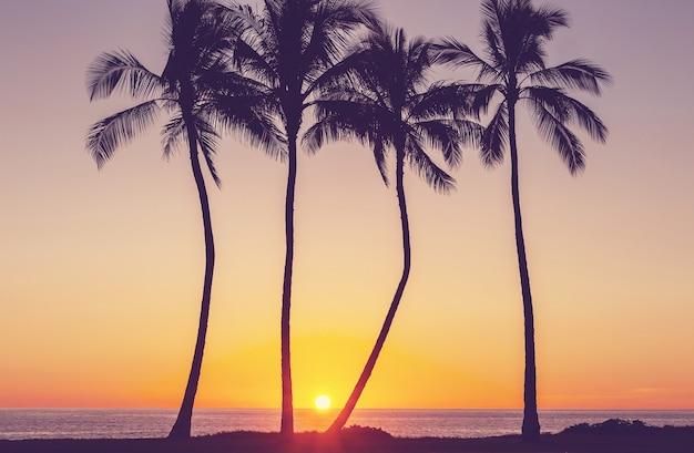 素晴らしいハワイアンビーチ