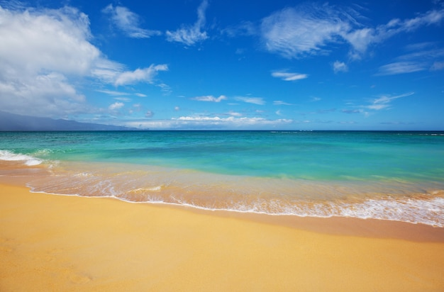 놀라운 하와이 해변