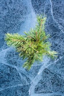 Изумительный лед с узорами и сосновыми ветками в стиле плоской укладки. много трещин и пузырьков воздуха. хвойные веточки для зимнего декора. вертикальный.