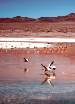 Amazing laguna colorada scenery with flock of beautiful flamingos