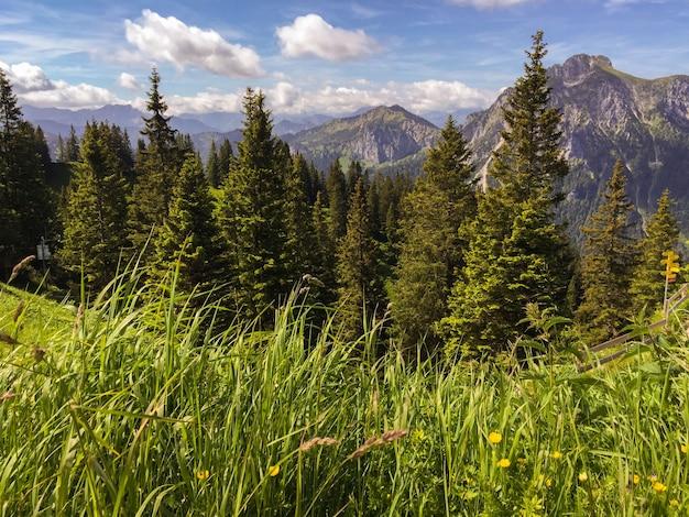 山と新鮮な草の素晴らしい風景