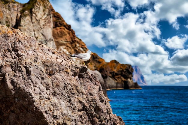Удивительный пейзаж на берегу синего океана в ясную солнечную погоду с чайкой на скале. линия воздействия скал на пляже. уютные фоны для сайта или большие обои. концепция релаксации, отдыха