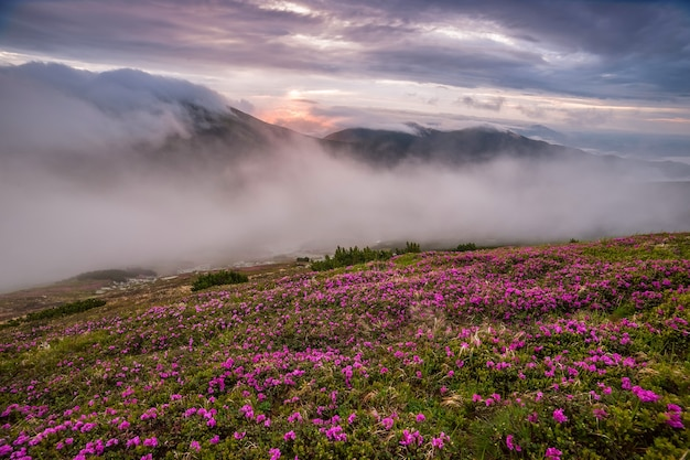 Amazing landscape with flowers in mountain and majestic sky
