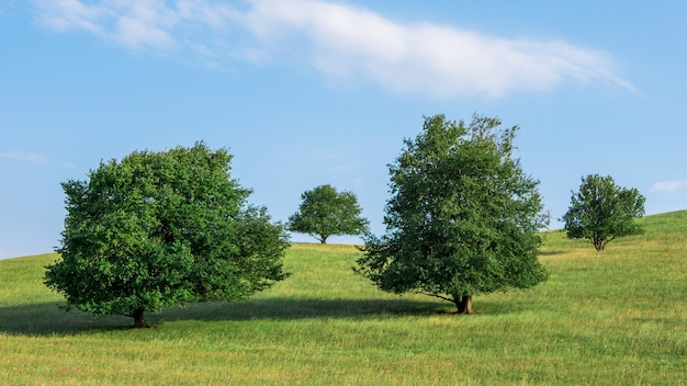 Amazing landscape with four trees standing in a green meadow