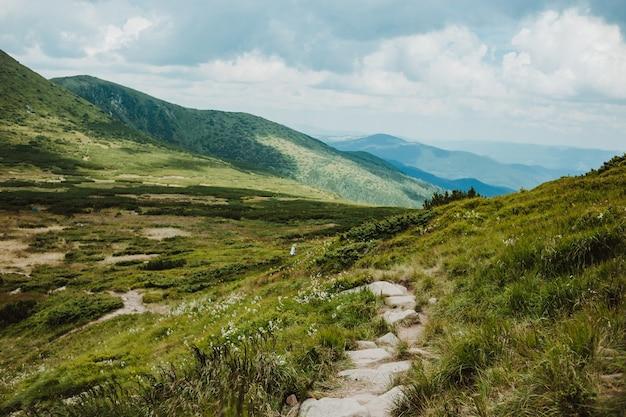 Удивительный пейзаж с горами и лесом
