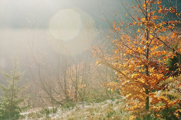 Amazing lights on forest of mountain, red leaves beerch tree on sunlight with sun beam.