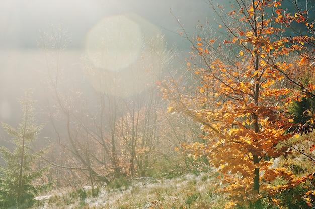 山の森のすばらしいライト、赤は太陽の光と日光でバーチの木を残します。