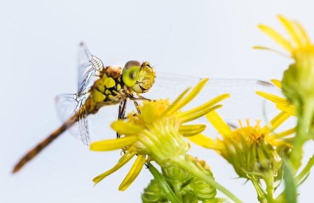 花に乗ったトンボの素晴らしいマクロ撮影