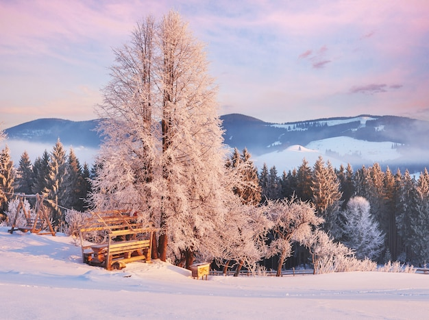 朝の日差しの中で素晴らしい山。カルパチア、ウクライナ、ヨーロッパ。
