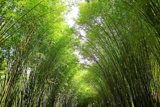 Удивительная арка из натурального бамбукового дерева в храме чулапорнванарам в провинции накорннайок, таиланд