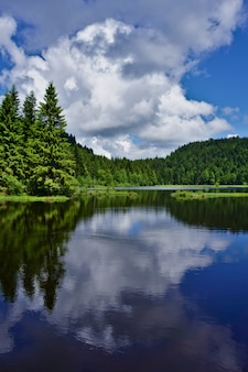Amazing reflection on the lake at lispach lake in the vosges, france. vertical picture.