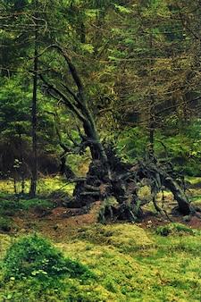Удивительный корень упавшего дерева причудливой формы