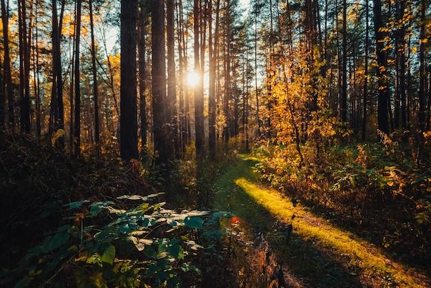Удивительный живописный пейзаж рано утром в осеннем лесу.