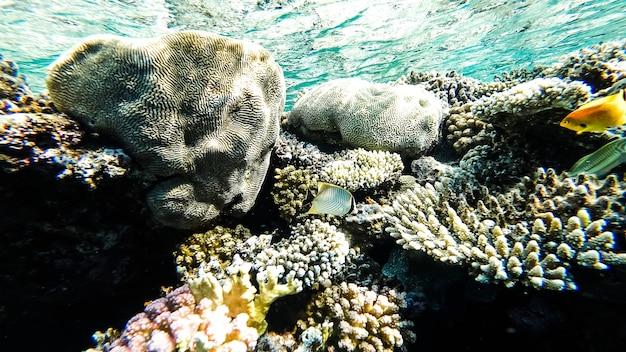 바다 바닥에서 놀라운 바다 경치입니다. 산호 근처에서 헤엄치는 물고기들