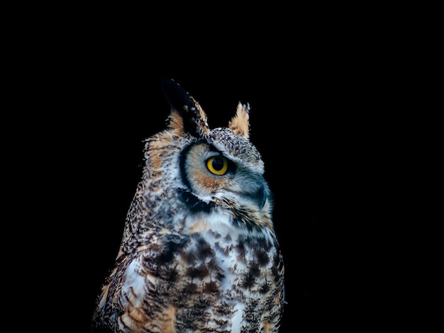 Amazing shot of a beautiful owl isolated on a black distance