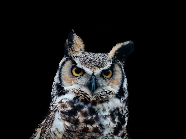 Amazing shot of a beautiful owl isolated on a black