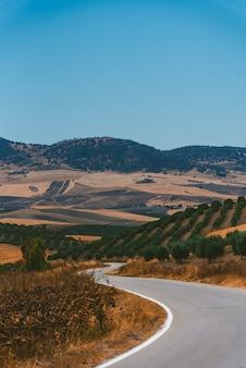 Удивительный снимок автострады, окруженной растениями, в алентежу, португалия, в жаркий день.