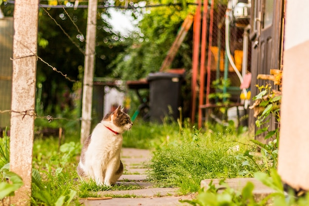 나무 문 근처 정원에 앉아 있는 사랑스러운 고양이의 놀라운 사진