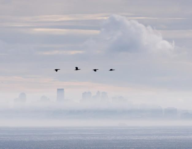 Удивительный снимок группы птиц, летящих над морем, на городском пейзаже сан-франциско.