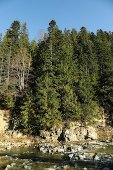 Удивительный еловый лес с красивой горной рекой