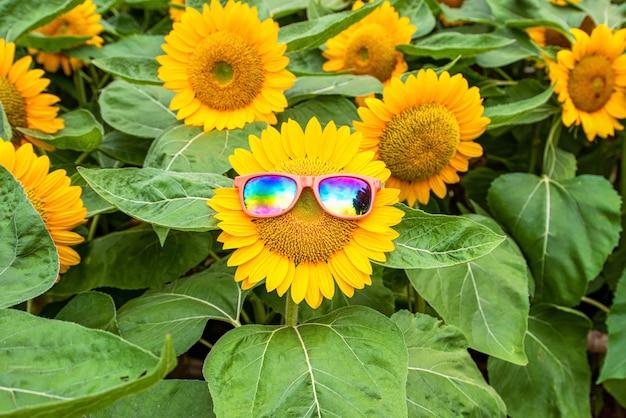 Amazing sunflower field with beautiful
