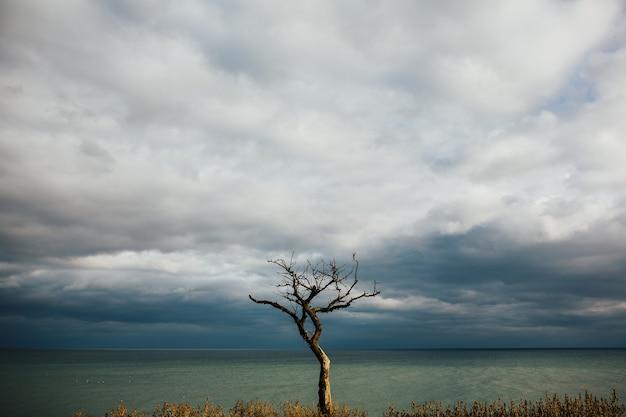 岩から生えている素晴らしい木。葉のない古い木、紺碧の海と曇り空のカラフルな風景。