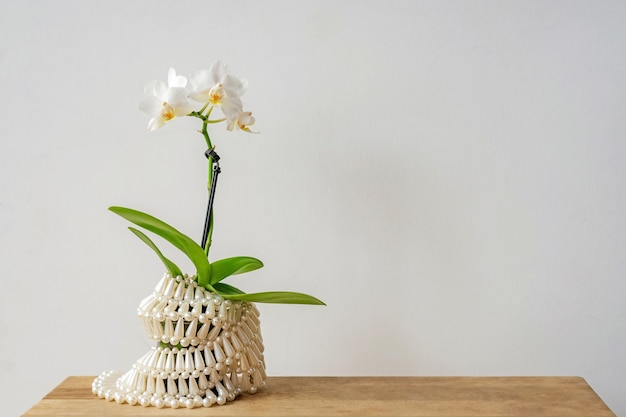 Amazing tropical blooming orchid plant in pot wrapped with white lacy fabric