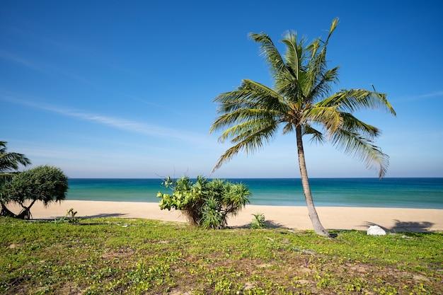 해변 바다에 코코넛 야자수가 있는 놀라운 열대 낙원 해변과 맑고 푸른 하늘 야외 여행 배경 여름 휴가 개념 자연 벽지 안다만 해 푸켓 섬 태국. 프리미엄 사진