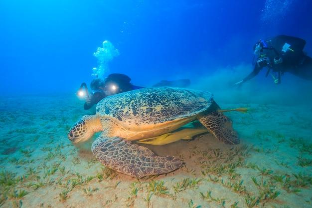 Amazing turtles from abu dabbab red sea egypt