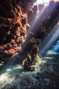 홍해의 놀라운 수중 세계