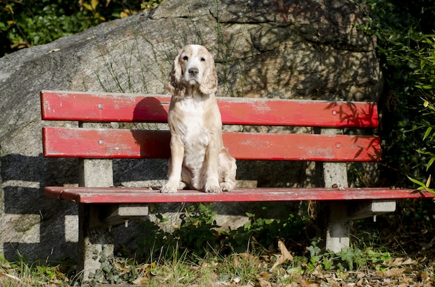 Amazing view of a calm sitting puppy on a red bench
