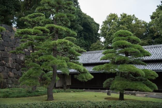 Amazing view in japanese garden
