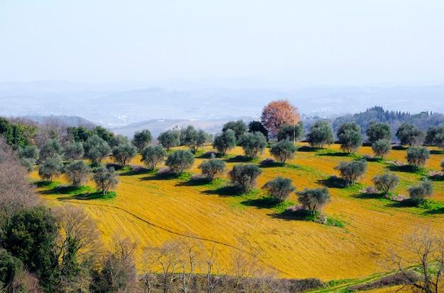 노란 식물, 풀, 나무로 덮인 다채로운 풍경의 놀라운 전망