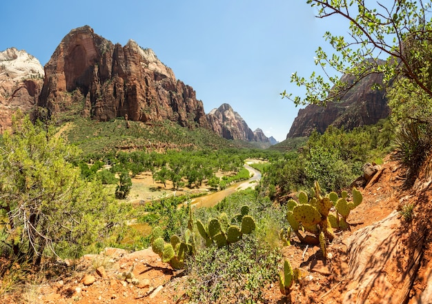ザイオン国立公園の峡谷の素晴らしい景色