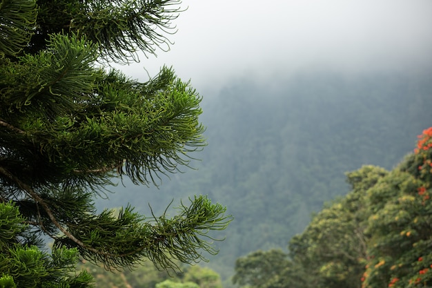 Amazing view of the spruce in the mountains. bali. indonesia.