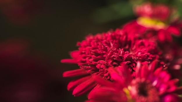 Amazing vinous fresh blooms