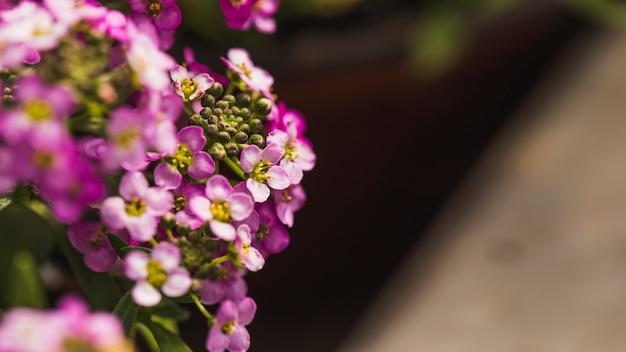 Amazing violet fresh wild blooms