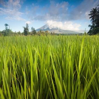 素晴らしい火山の風景。マヨン山の古典的な形の有名な火山と緑の谷の間にぶら下がっている雲。