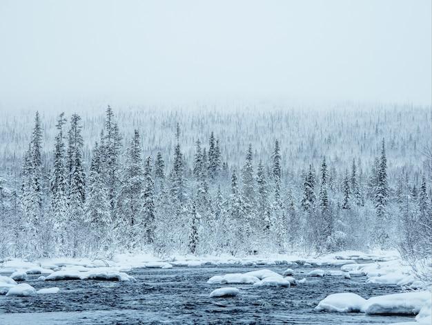 Удивительный зимний пейзаж с заснеженными холмами, покрытыми хвойным лесом.