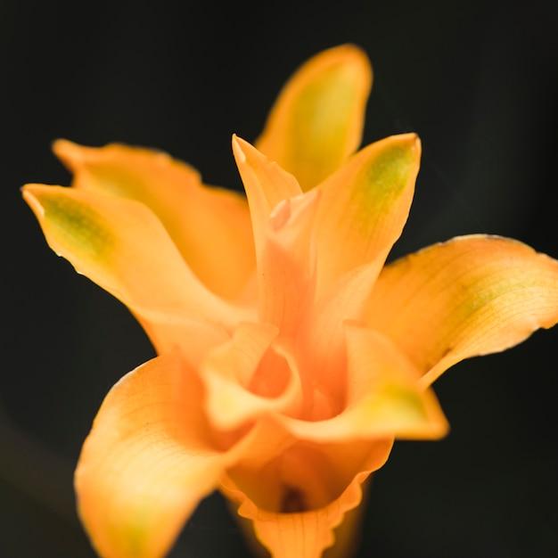 놀라운 노란색 신선한 열대 꽃