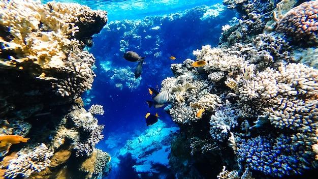 산호가 있는 홍해 바닥의 놀랍도록 아름다운 전망, 그 근처에서 열대어가 태양에 의해 조명을 받아 수면에서 떠다니고 있습니다.