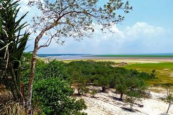 Amazon rainforest water tropical forest flora