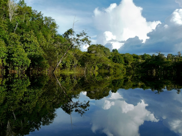 Amazon river in the rainforest