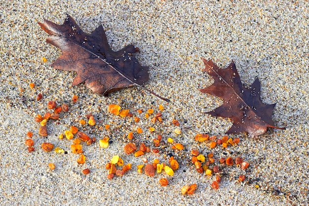 Янтарь в песке. янтарные и осенние дубовые листья на берегу моря.