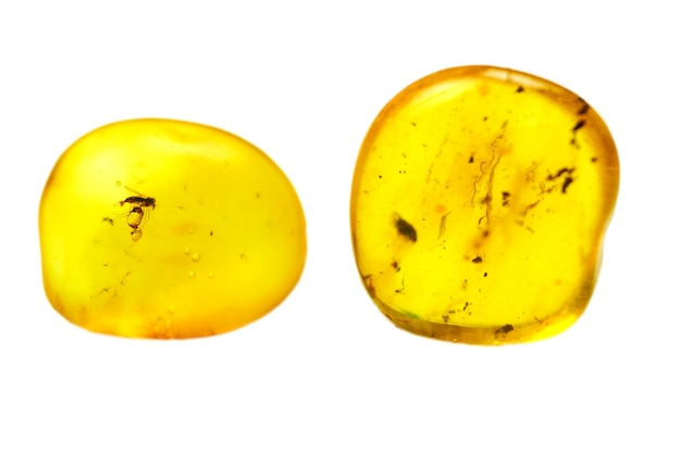 Amber stones with mosquito. bright yellow stone from baltic sea. natural mineral for jewelry