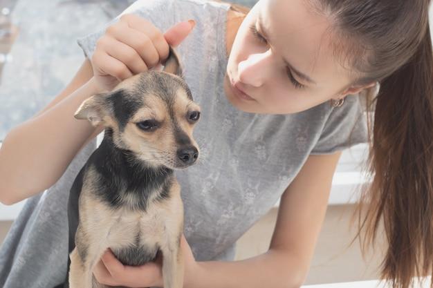 ペット用の救急車。女性獣医が小型犬のおもちゃのテリアを調べ、耳をチェックします