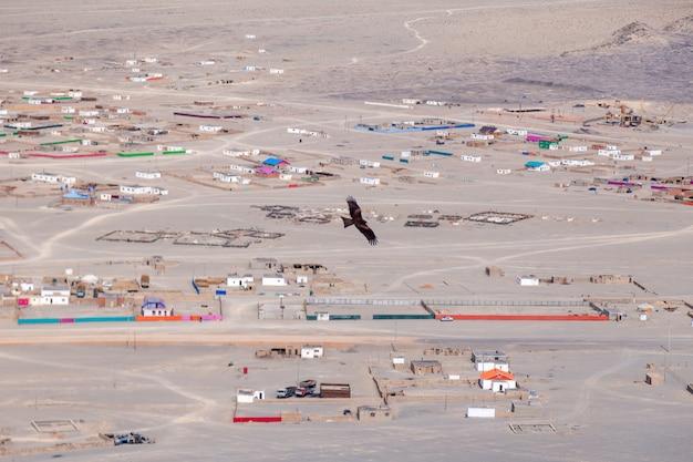 Американский коричневый белоголовый орлан в полете