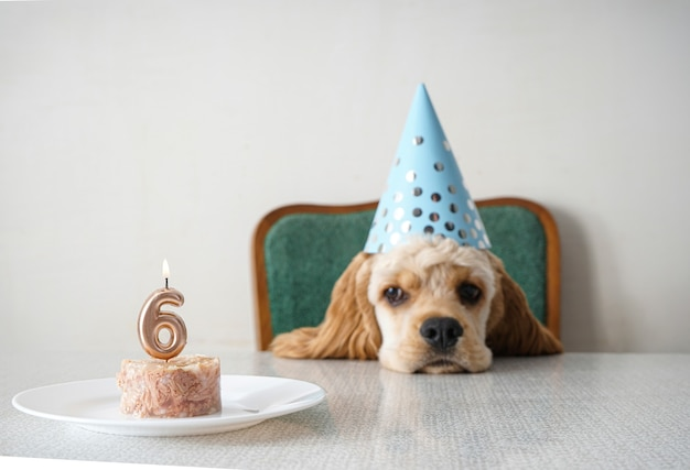 День рождения собаки американского кокер-спаниеля место для текста.